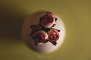 photographe détails fleuris