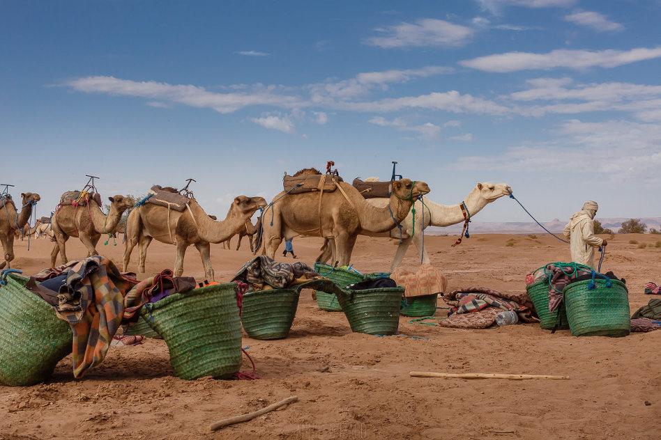 berbères et dromadaires maroc