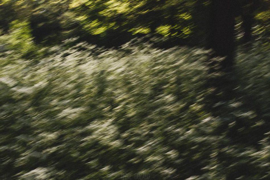 échappée dans le bois